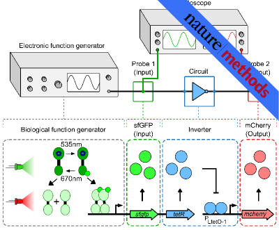 Optogenetic function generator for characterizing gene circuits